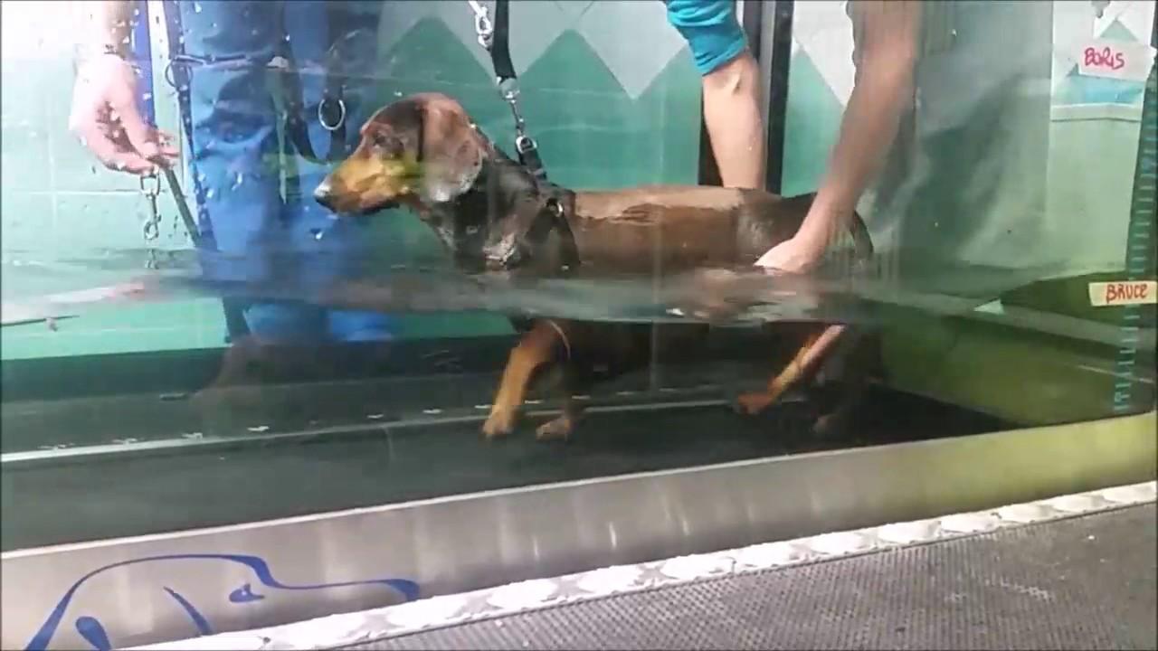 Tapis Roulant In Acqua Per Cani Riabilitazione Divertente Youtube