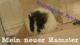 MEIN NEUER HAMSTER - Teddyhamster Pumba (Zähmung)
