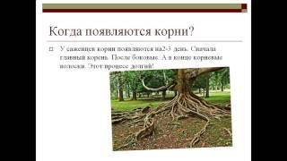 презентация корень растения 3 класс
