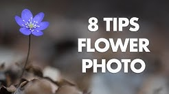 My 8 Best Tips for Flower Photography