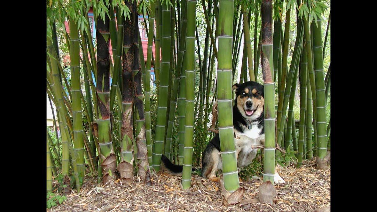 Watch Dogs  Pot Garden