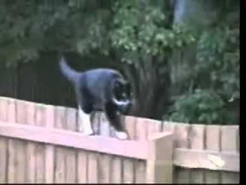 Video Divertenti Animali Provate a non ridere.wmv