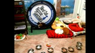 Blind Cat Rescue & Sanctuary, Inc Live Stream thumbnail