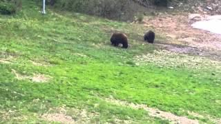 ヨーホー国立公園&モレーンレイク観光中に遭遇したグリズリーベア(2015...