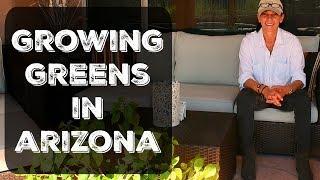 Winter Vegetable Garden in Arizona - Soil Mix, Watering, Fertilizing & Thinning