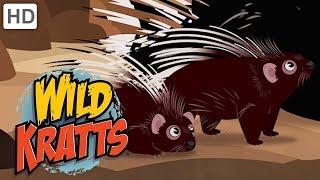 Wild Kratts 🐺🦈🦇 Creature Nicknames! (Part 2)   Kids Videos