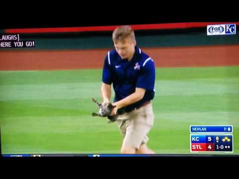 Cat attack during MLB Game turns into Grand Slam