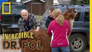 Official Preview | The Incredible Dr. Pol
