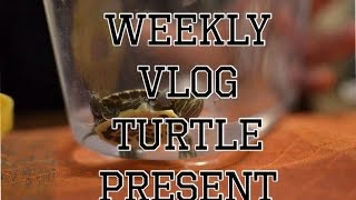 Weekly Vlog- TURTLE birthday present! Thumbnail