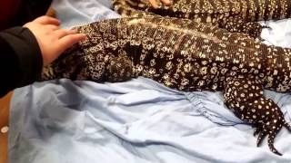 New York White Plains reptile expo 02/08/15