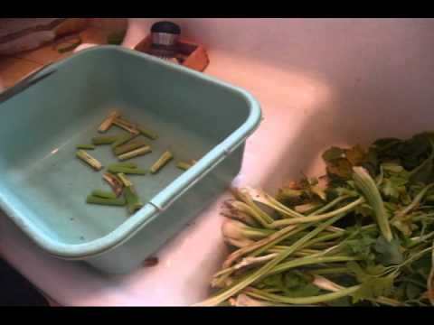 ez how to freeze celery - How To Preserve Celery