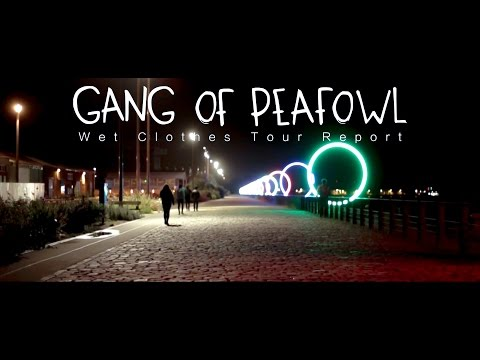 Gang of Peafowl - Wet Clothes Tour Report