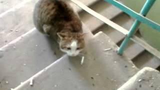 Кошки в подъезде :)