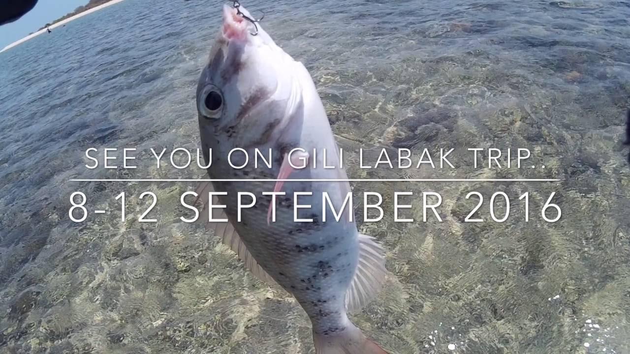 Ultralight Fun Fishing Preview Gili Labak Trip Part 2 Grey Giant Trevally Hitam M
