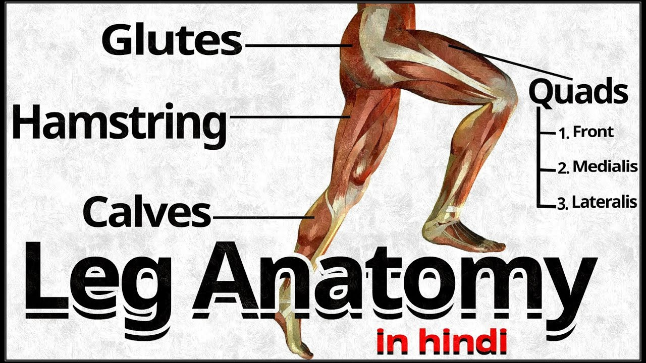 Best Exercises For Build Legs Muscles | LEG ANATOMY | Hindi - YouTube