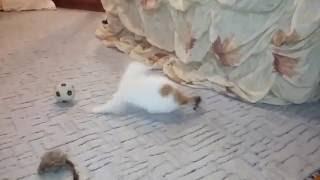 Матрешка-совершенно обычный котенок.