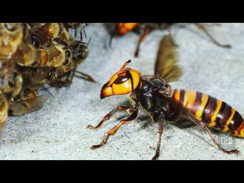 Топ 7 самых опасных насекомых России! Лучше не подходите к ним!