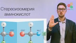 Биологические макромолекулы. Аминокислоты и вторичная структура белков