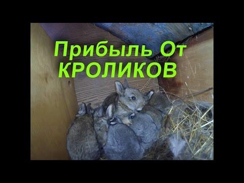 Рождение/ Крольчат/Сколько Можно Заработать На Кроликах