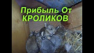Сколько можно заработать на выращивании кроликов