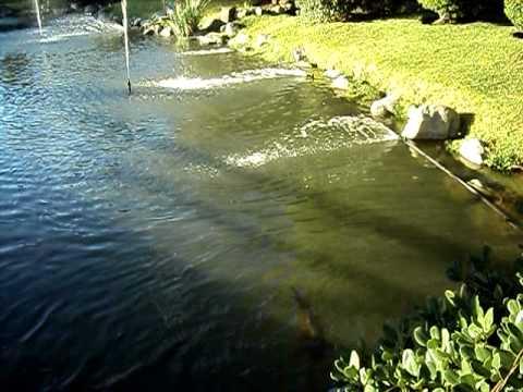 Jard n japon s lago artificial youtube for Jardines con lagos artificiales