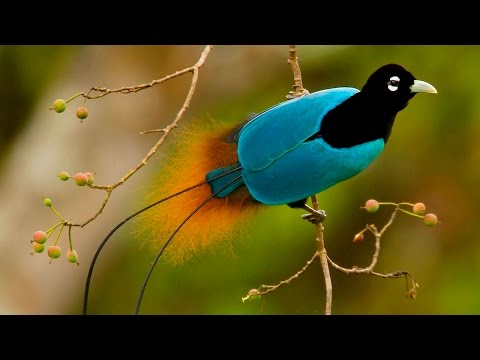 Самые УДИВИТЕЛЬНЫЕ птицы