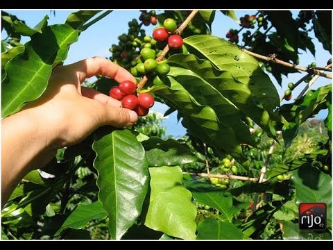 Tolima Café de Colombia - Our brand for best coffee money can buy.