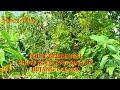 Pikat Kutilang Binaan Bujang Talang  Mp3 - Mp4 Download