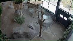 Ähtäri Zoo Pandalive