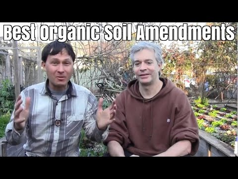 Best Organic Soil Amendments to SuperCharge Plant Growth