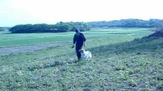 群馬県伊勢崎市にある清水警察犬・家庭犬訓練所の動画をアップしていま...
