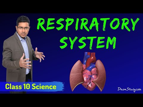 Respiratory System - Respiration In Life Processes (Chapter 5): CBSE Class 10 Science.