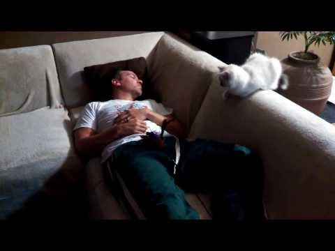 How to wake up sleeping husband with ragdoll cat