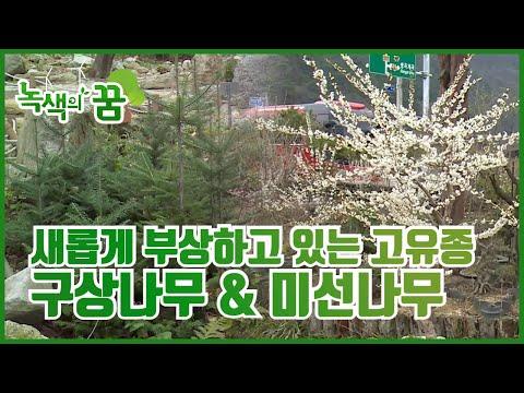 우리나라 고유식물, 구상나무 & 미선나무 [녹색의 꿈] / YTN 사이언스