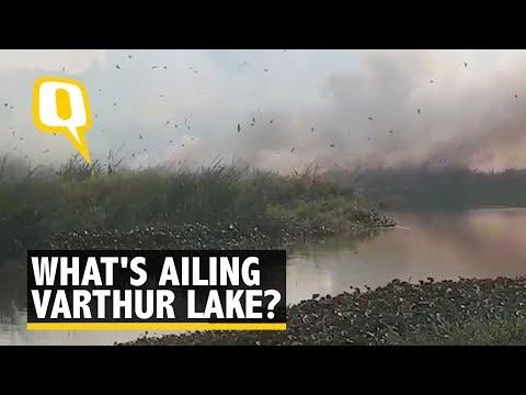 First Bellandur, Now Varthur: Why Bengaluru's Lakes Keep Burning