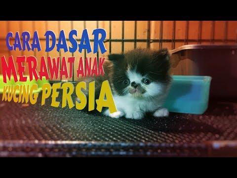 HEY GUYSSS ini dia tips adopsi kucing versi gue, semoga membantu kalian yg lg mempertimbangkan untuk pelihara kucing....