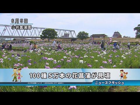 100種5万本の花菖蒲が見頃