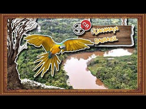 guacamayo barba azul: La familia modelo de las aves - documental de animales salvajes
