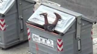 Mendigo ficou entalado no latão de lixo