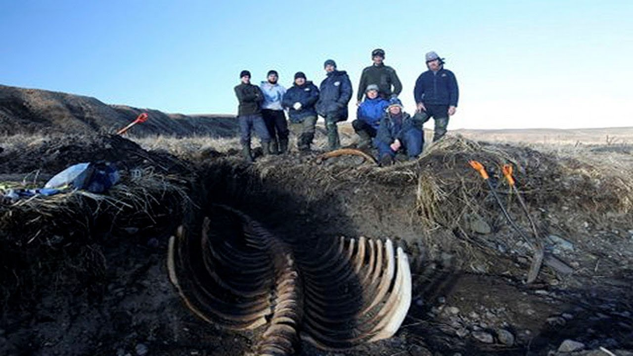 Skeleton of ancient Steller's sea cow found in Russia; Mermaid next?