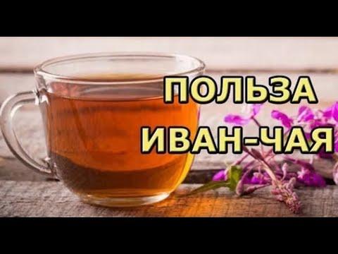 Иван чай: полезные свойства и противопоказания