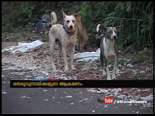 SC says stray dog victim be given compensation for 4 week