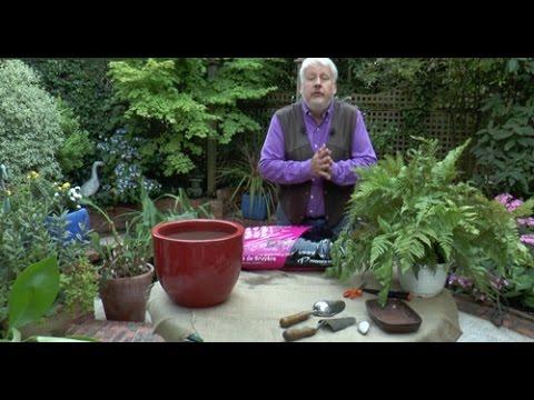 Comment rempoter et diviser une foug re d 39 ext rieur youtube - Comment rempoter une plante d exterieur ...