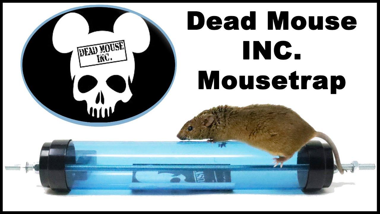 Image result for https://www.deadmouseinc.com/