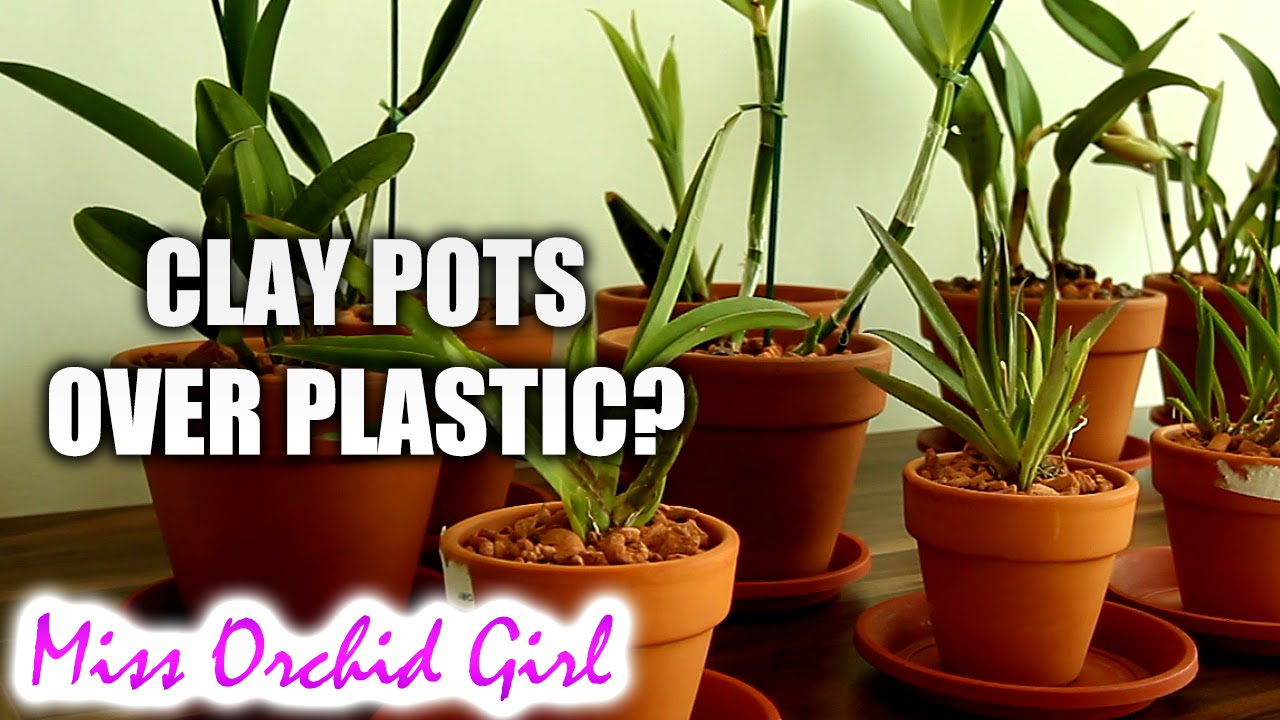 Why I Grow Orchids In Clay Pots Not Clear Plastic Pots Youtube
