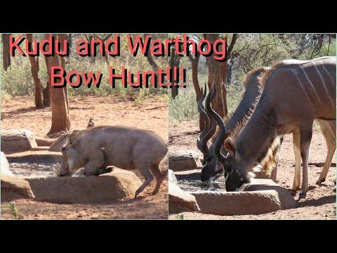 Kudu and Warthog bow hunt!