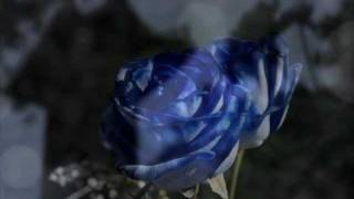 Watch Awakening Where Roses Grow video