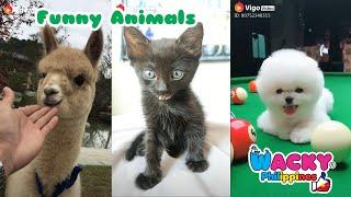 Best of Tik Tok Funny Animals | Wacky Tik Tok