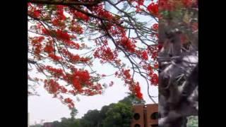 Tumi Ki Dekhechho Priyo / Kabir Suman  (www.kabirsumanonline.com)