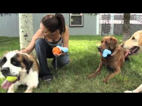 zogo-flex-super-tough-dog-toys